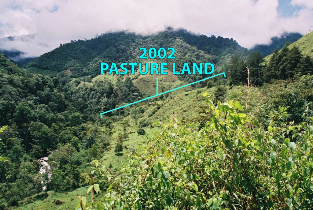 2002 Reforestation Area Pasture