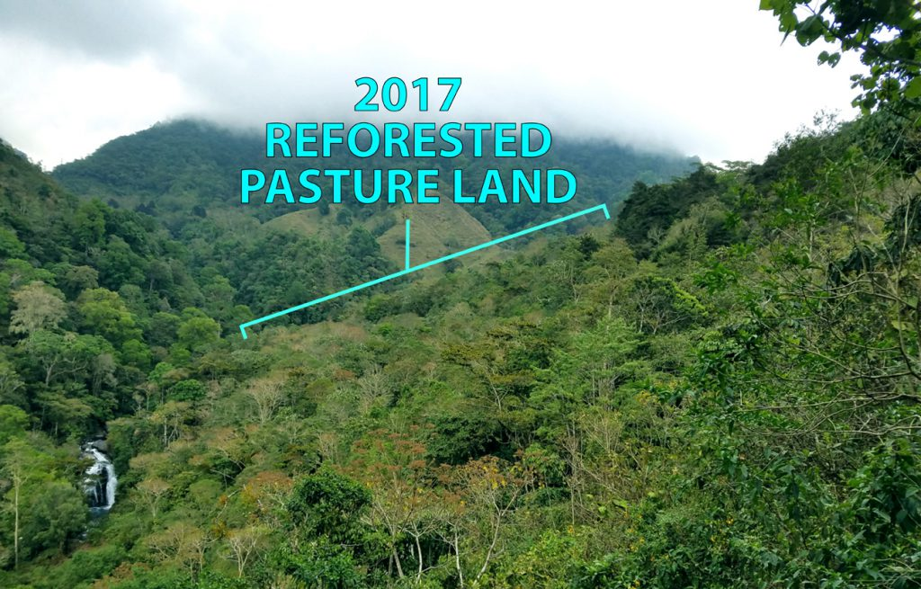 2017 Reforestation Area Cloud Forest