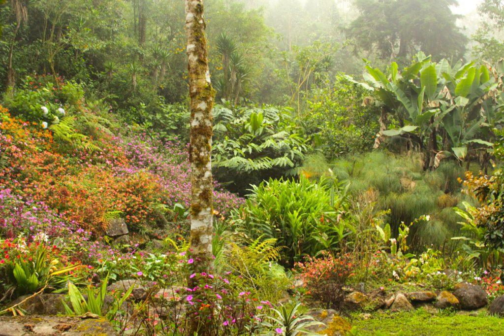Memorial-Garden-Cloudbridge-Nature-Reserve