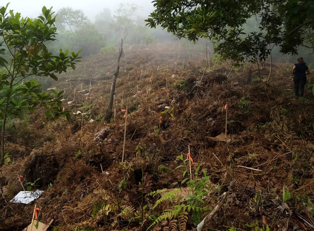 Planted Area Reforestation