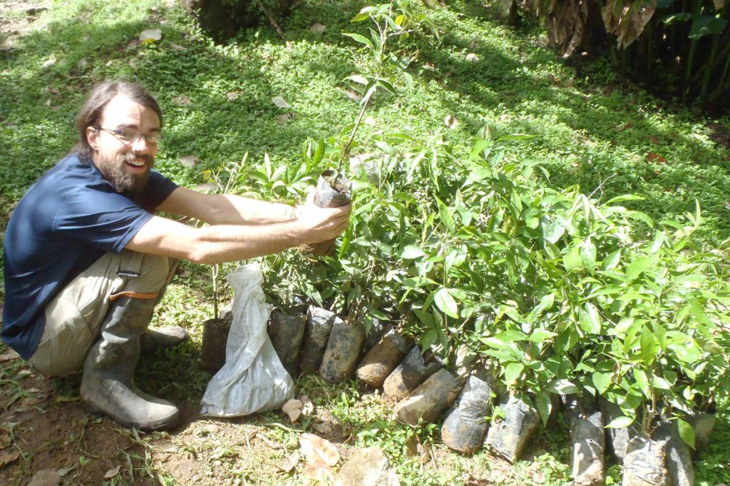 Native Tree Seedlings Costa Rica