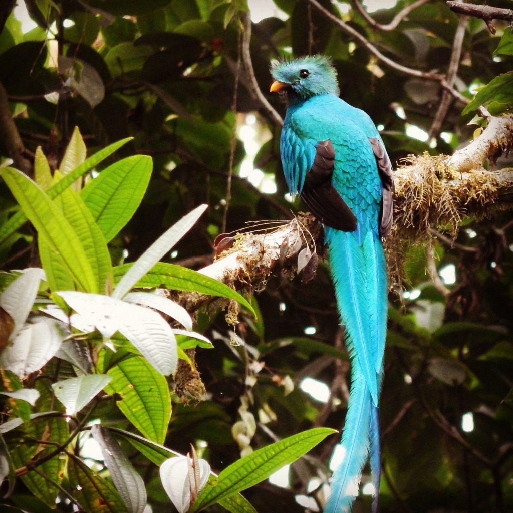 Tour_Resplendent_Quetzal